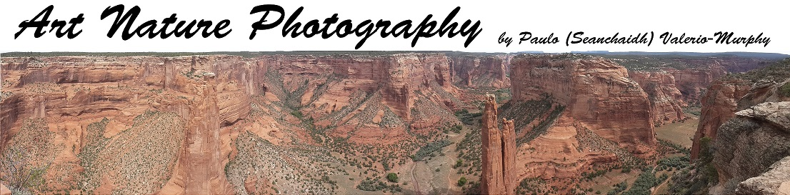 PHOTOGRAPHIC GALLERIES